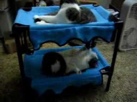 My cats on their new cat size bunk beds