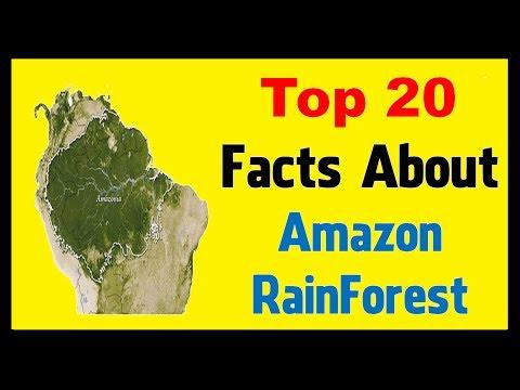Amazon Rainforest - Facts