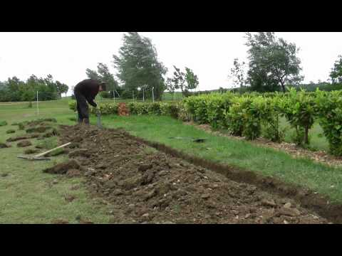 Real Apprentices -  Sports Turf