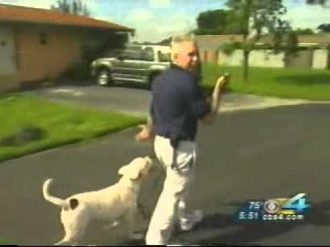 Miami Dog Whisperer Dog training Tip: How to walk your dog properly