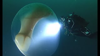 Divers Find Giant Squid Egg
