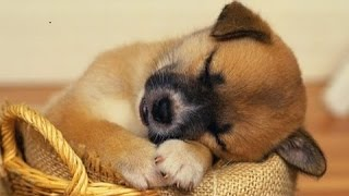 SLEEP MUSIC For Dogs, Cats & All PETS ♥♥♥ Stress Relief, Anxiety, Healing Music 🎧 PET THERAPY