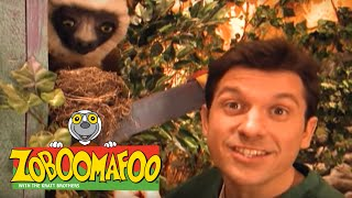 🐒Zoboomafoo 125 - Great Singers | HD | Full Episode