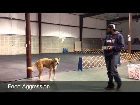 Food Aggression explained | Majors Academy Dog Training and Rehabilitation