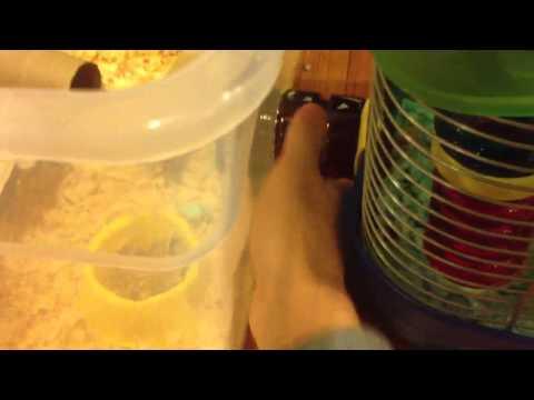 Robo Hamster Cage Tour: Half Cage/Half Plastic Bin