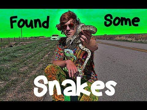 Colorado Snake Adventure