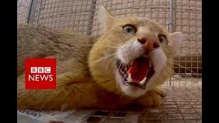 The pest controller of Kandahar - BBC News