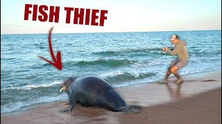 Download ENORMOUS 700lb SEAL SNATCHES MY FISH!! (Beach Fishing In Nantucket) Video