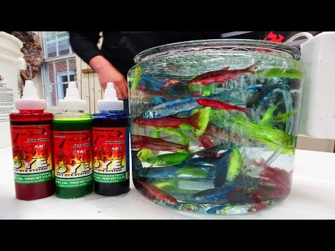 Epic Baits: Learn to Fire Dye Live Minnows