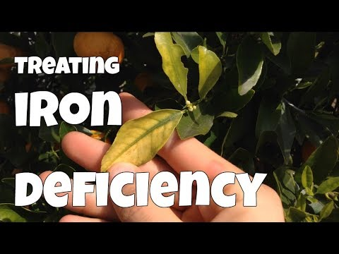 How to Identify & Treat Iron Deficiency in Your Plants