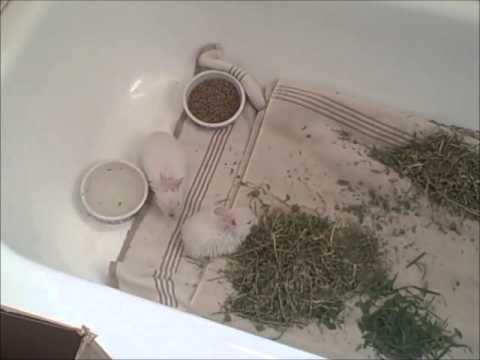 How to raise a baby bunny, part 5