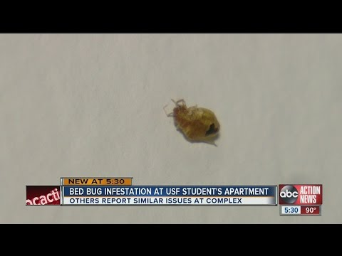Bed bug infestation keeps USF student sleeping in car, university classroom