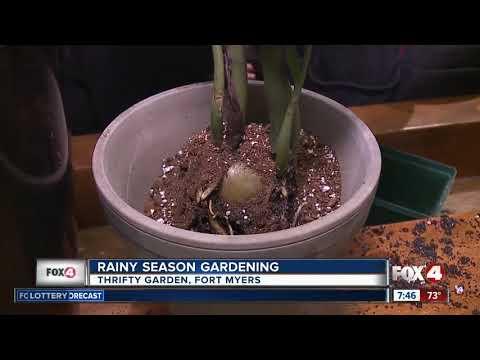 Raining Season Gardening