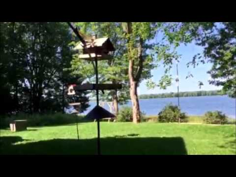 How to Keep Squirrels Off Your Bird Feeders with Pole System Placement