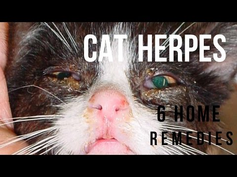 Cat Herpes: What It Is and What You Can Do About It
