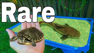 Destroyed TURTLE Pond Gets AN UPGRADE!!