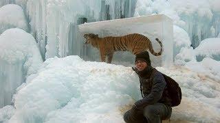 Animals Found FROZEN In Ice! (part 2)