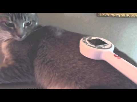 Magnetic Pulse your Cat for health
