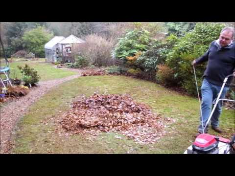 How to make leaf mould from fallen leaves