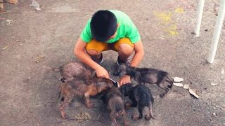 This 11 Yr Old Saved These Starving Creatures From A Roadside  Now He's Working Even More Miracles