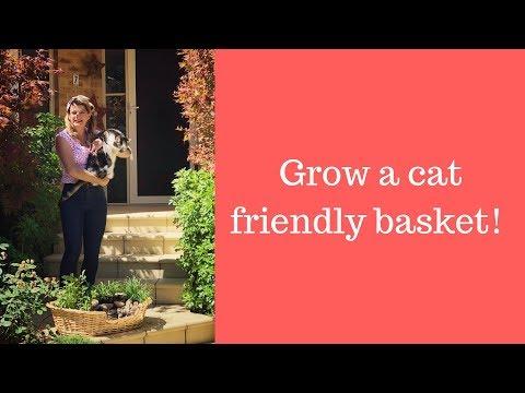 Cat Friendly Plants in a Basket! // Grow a cat friendly basket // Cat herbs // The Gardenettes