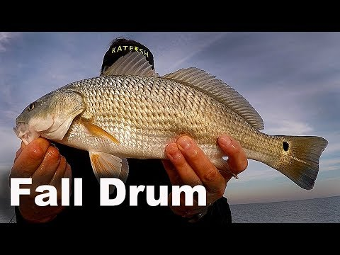 Fishing For Black Drum and Redfish - Murrells Inlet Redfish and Black Drum - Coastal Fall Fishing
