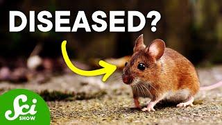 Disease Ecology   SciShow Talk Show