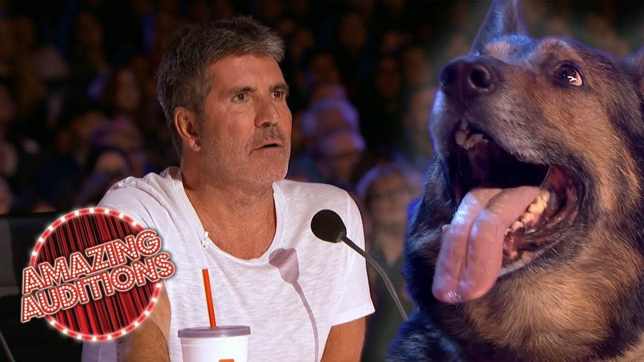 UNEXPECTED SMART Animal Auditions on Got Talent   Amazing Auditions