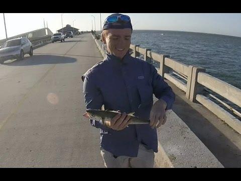 Skyway Pier Fishing - SPANISH MACKEREL AND LADYFISH