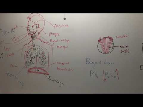 Recorded lecture: Respiration and Male reproductive