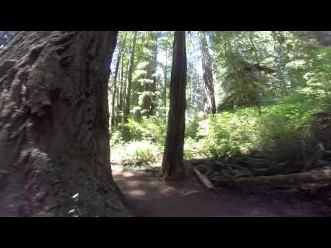 Motorcycle Ride through Redwood National Forrest