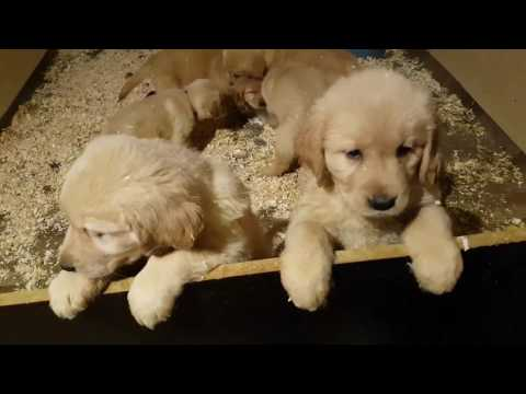 Lots of cute puppies