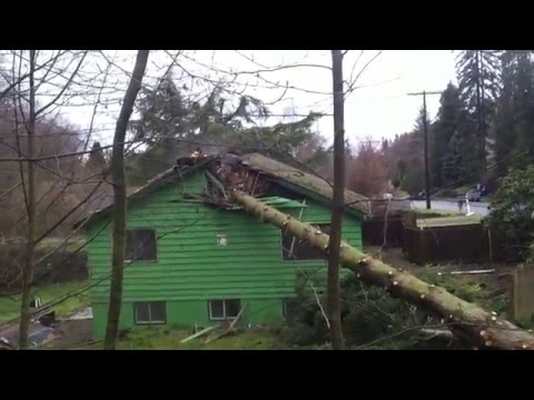 Tree falling on the house!