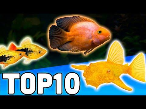 Top 10 Petsmart Fish