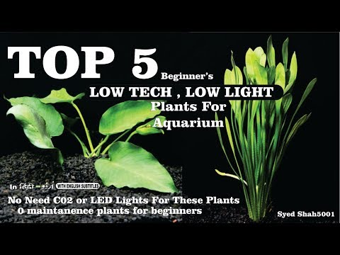 Top 5 beginner's Plants for low light low tech Aquariums in Hindi Urdu with English subtitles