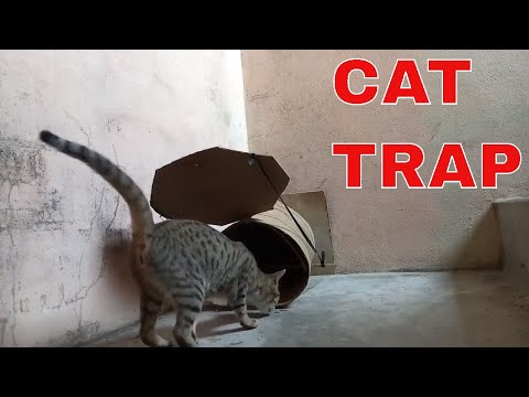 CAT TRAP - How To Catch Cat By Trap