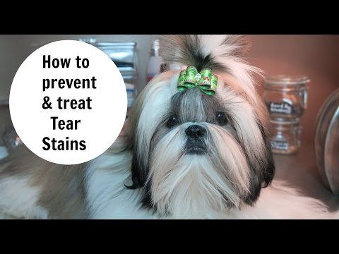 HOW TO PREVENT AND REMOVE DOG TEAR STANS