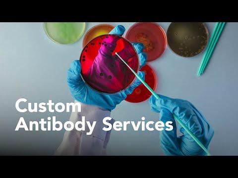 R&D Systems Custom Antibody Services - Bio-Techne