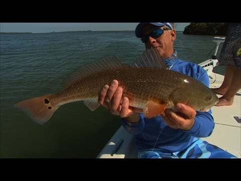Inshore Fishing Tampa Bay Florida for Snook and Redfish