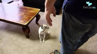 How to Greet a Dog So You
