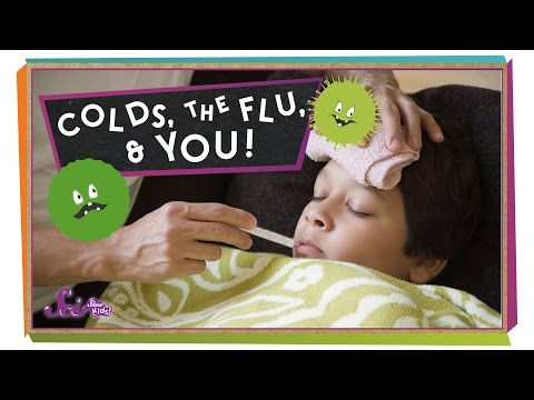 Colds, the Flu, and You