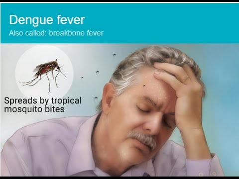 How to EASILY Prevent and Cure Dengue or Chikungunya (mosquito-borne disease) fever