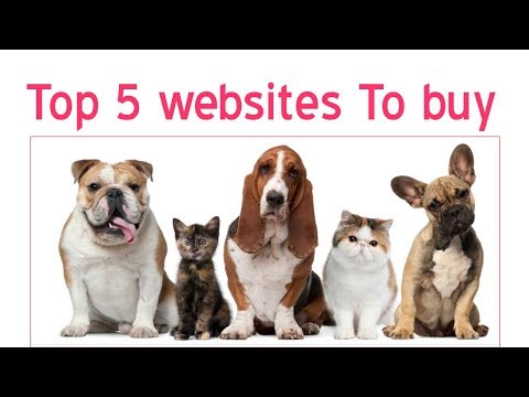 Top 5 Websites to Buy Pets in India | Dog price in India | Must watch