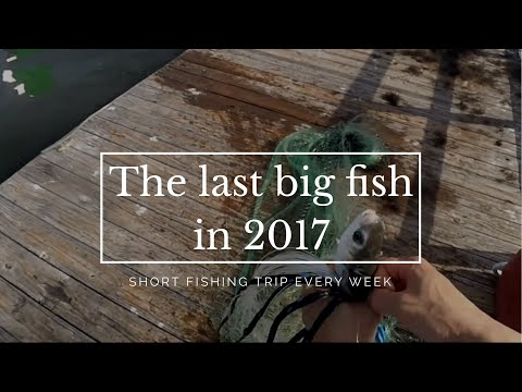 Caught the last big fish with a cast net for 2017