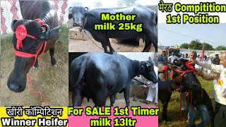 For Sale 1st Timer Buffalo & Cover  Compitition Winner Heifer 25kg Mother Milk Record