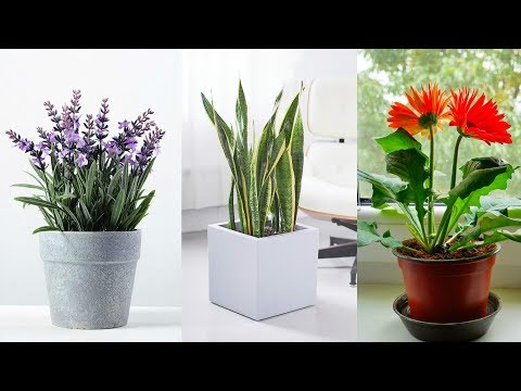 The 10 Best Plants to Have in Your Bedroom to Help You Sleep Better