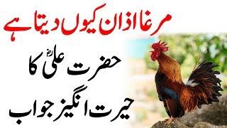 Murgha Azan Q Deta Hai, Hazrat Ali Ka Khubsurat Jawab
