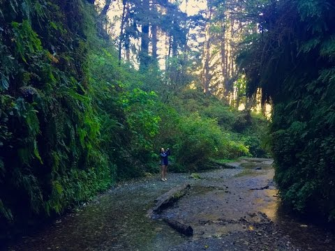 Fern Canyon - Redwood National Park