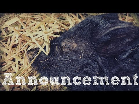 Quick Pig Breed Series Announcement