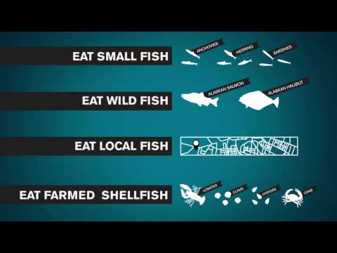 Saving the Oceans by Eating Sustainable Seafood